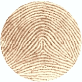 Tented Arch Fingerprint